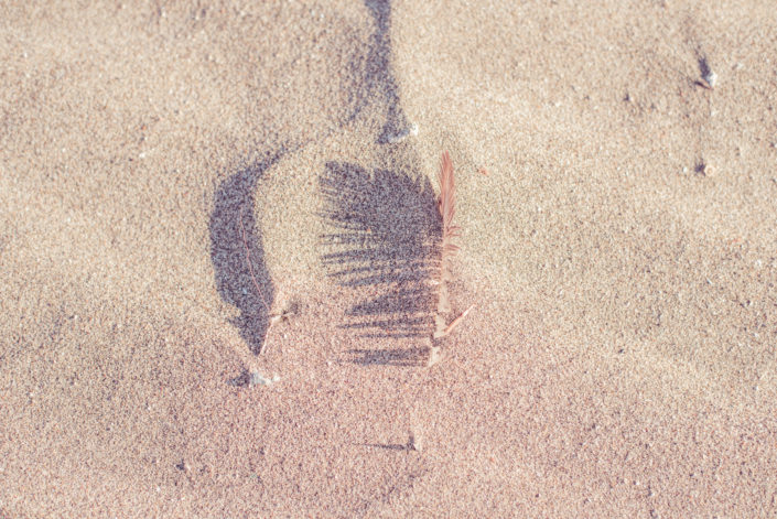 detail photography of a feather in the sand, fotografia di dettaglio di una piuma nella sabbia