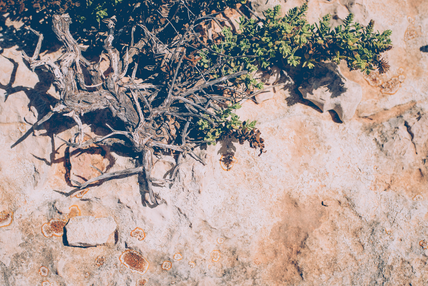 detail of some green plants growing on the rocks of lampedusa