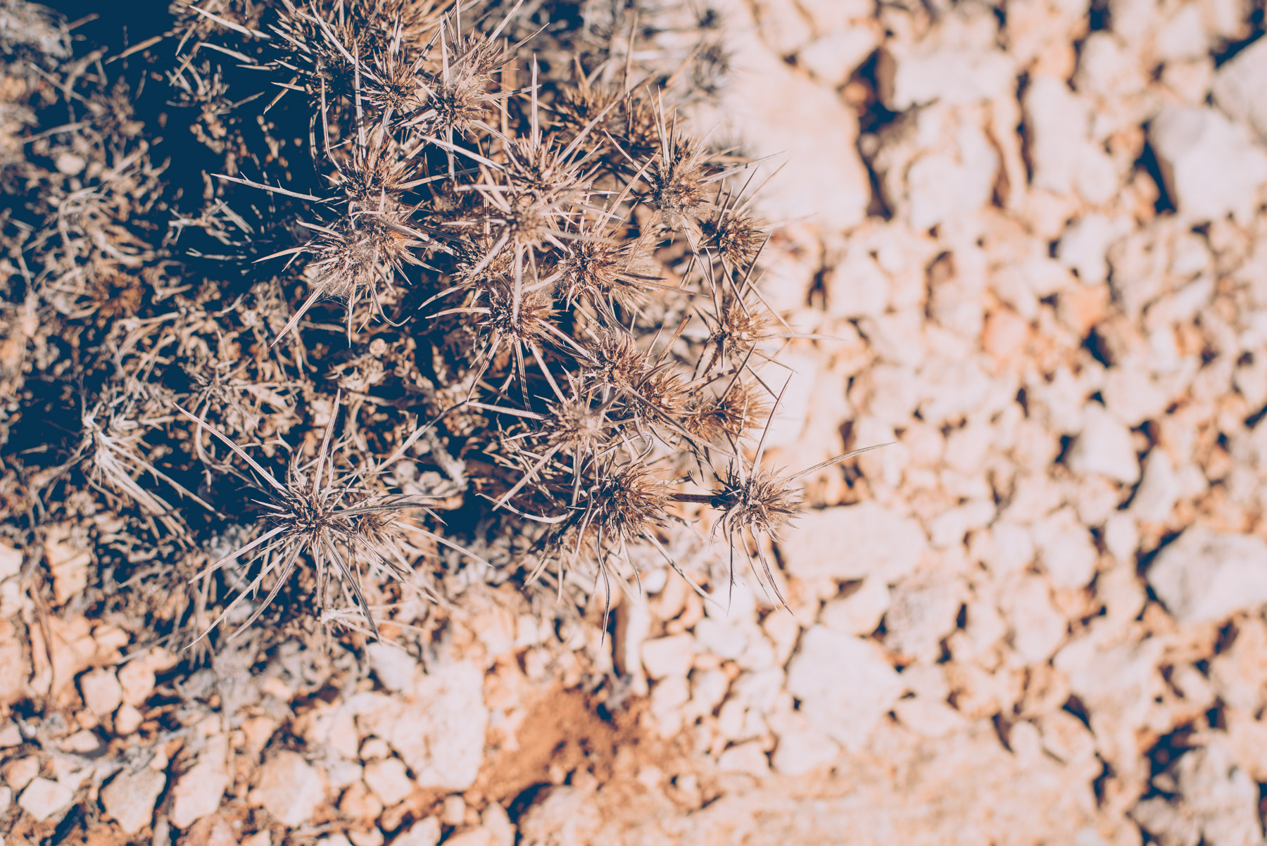 detail of spiky plants growing on the island of lampedusa