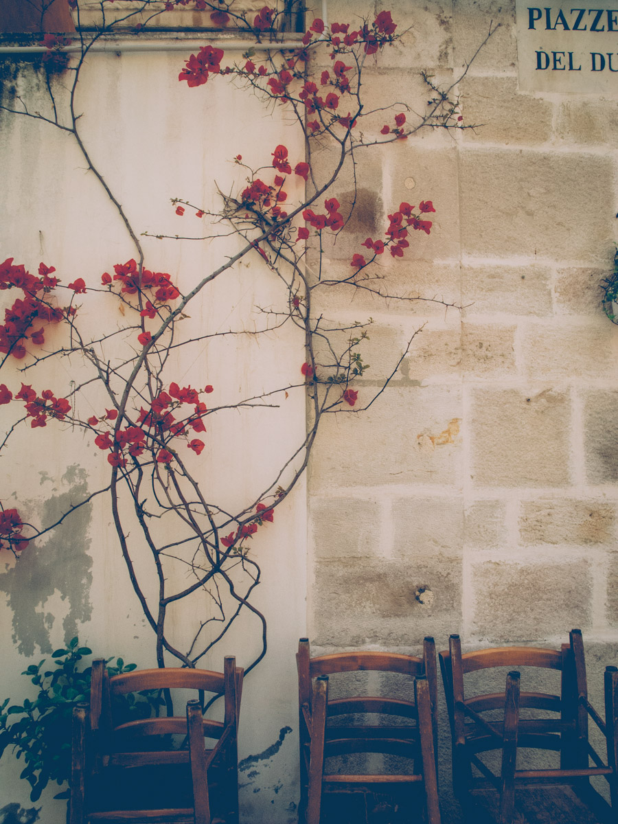 red climbing flowers on a white wall with wooden chairs in barletta
