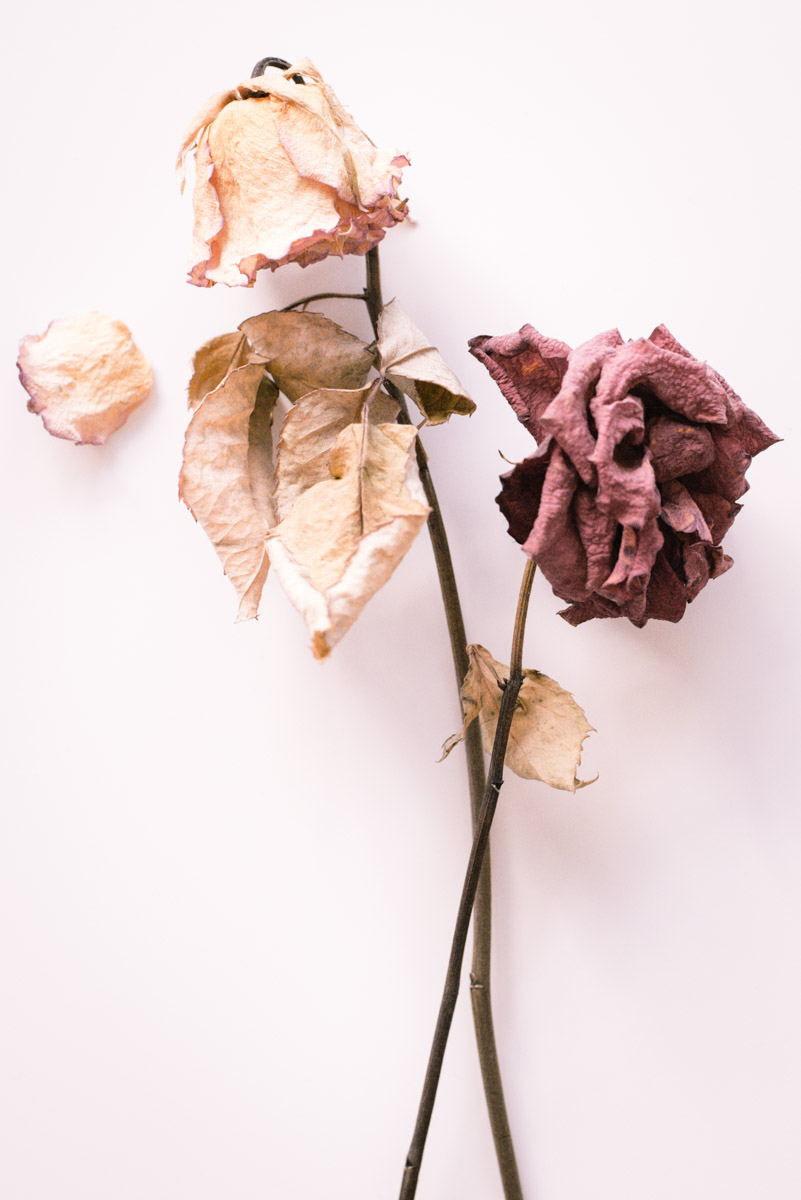 a yellow and red dried roses
