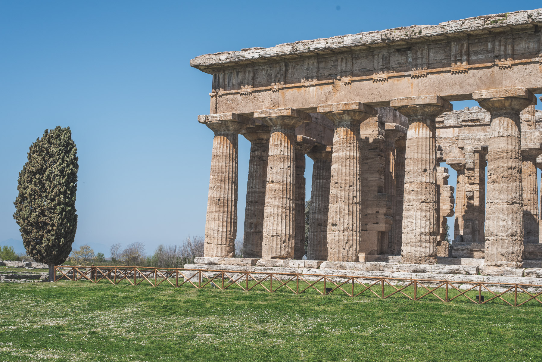 Columns of an ancient Greek temple in Paestum