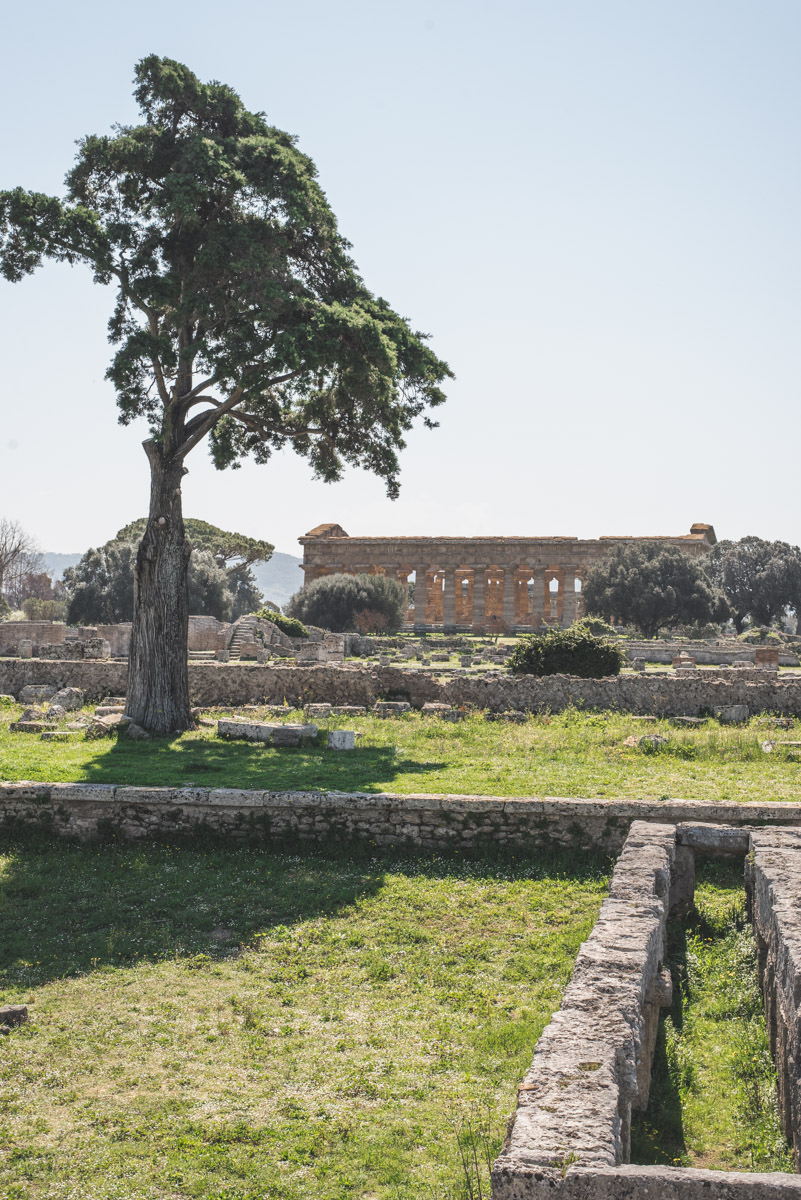 A landscape image of the ancient site of Paestum with a temple in the background