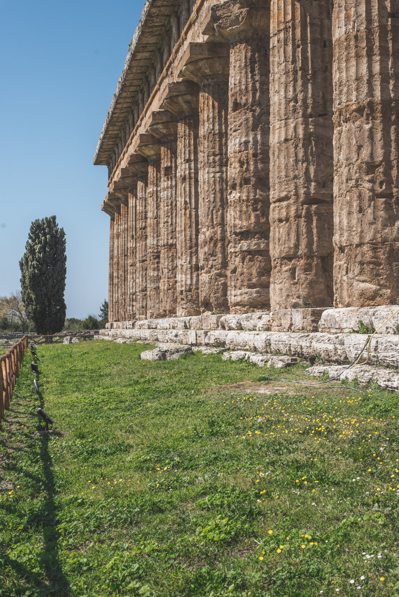 A tree and some columns of an ancient Greek temple in Paestum