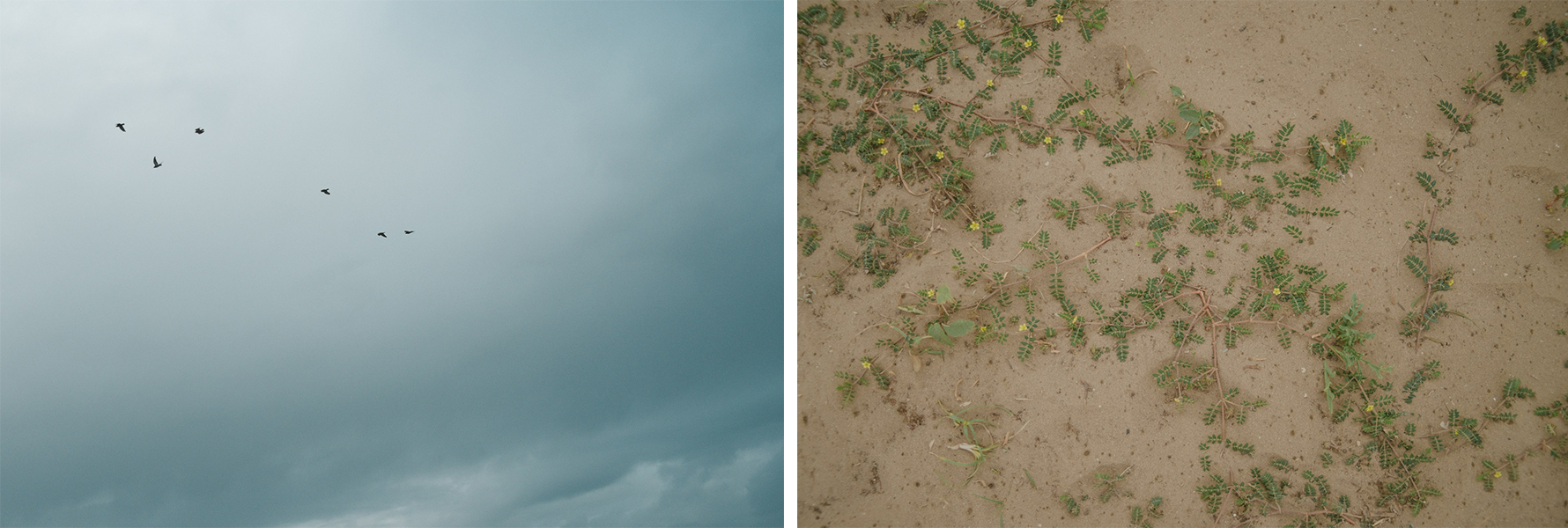Dettagli di piante sulla sabbia e cielo grigio con uccelli che volano lontano - details of some greenery and small plants in the sand paired with grey sky and some birds flying high