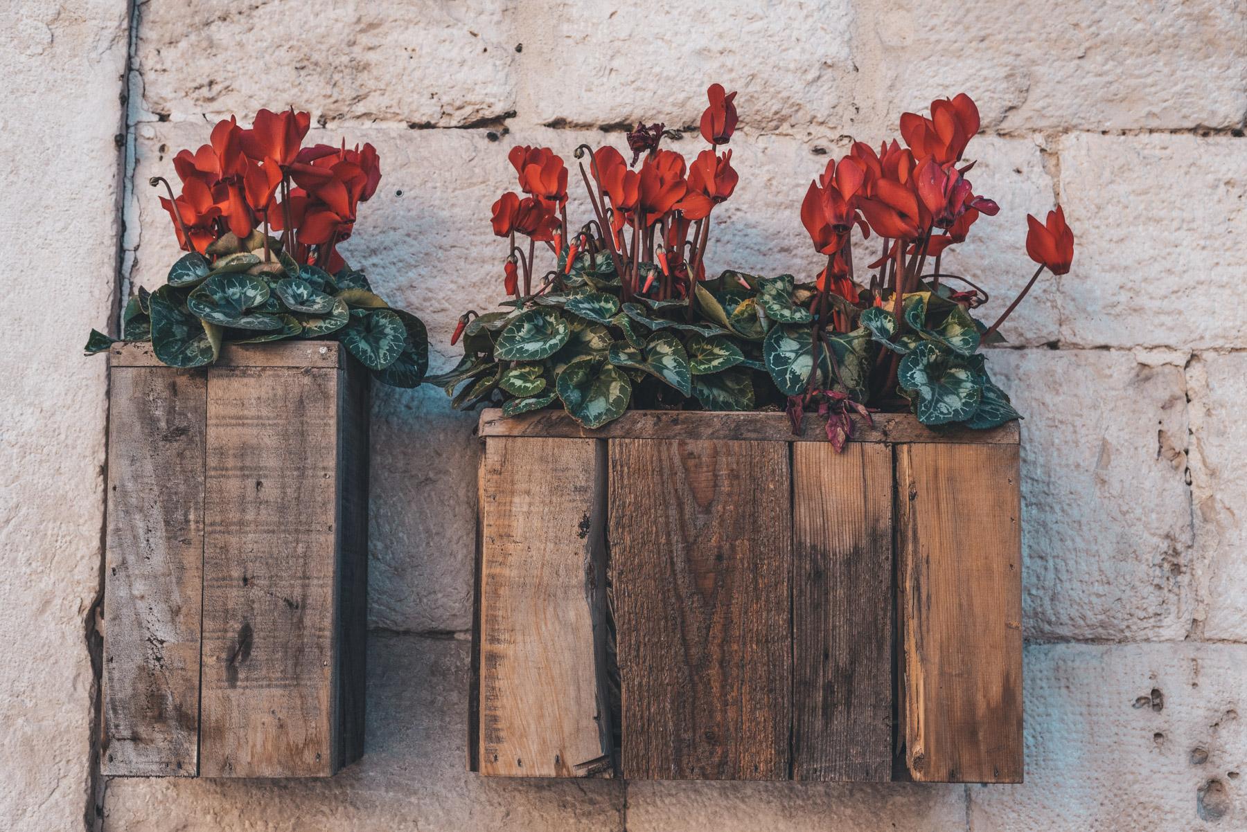 Red flowers in a woody vases on a wall in Barletta, Apulia, fiori rossi in vasi di legno su un muro a barletta, Puglia