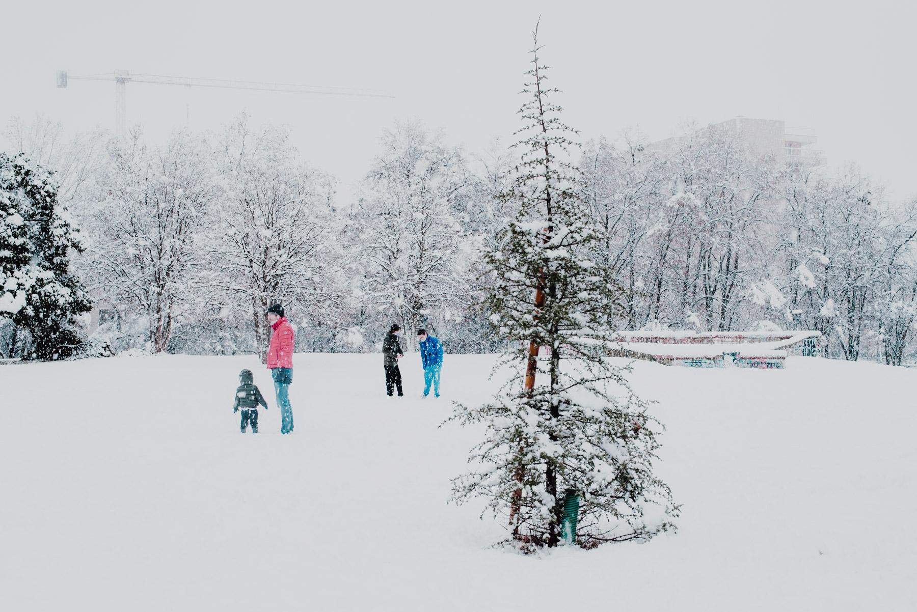 Snow in Milan on December 2020, a small tree is covered in snow while people on the background chat, neve a Milano a dicembre 2020 al parco Formentano c'è un piccolo albero coperto di neve e in lontananza delle persone e dei bambini che parlano